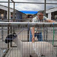 Duran DuBoise washes his lamb at the Bi-County Fair in Prewitt Friday.
