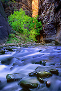 The Narrows part of the Virgin River in Zion National Park, Utah