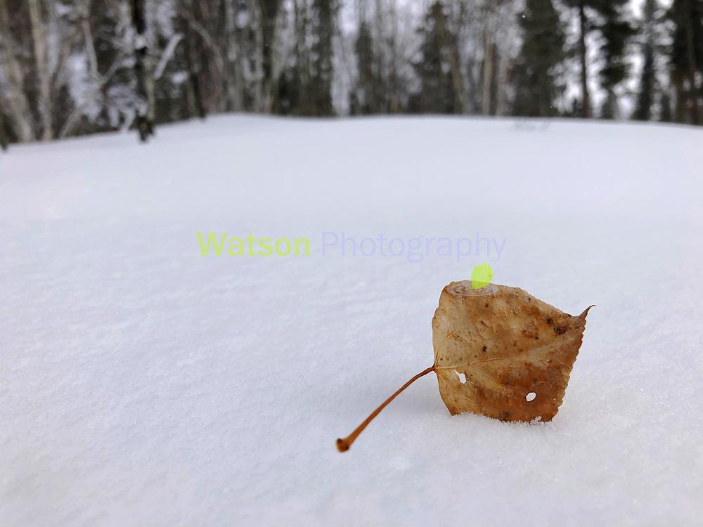 Aspen Leaf's Winter Landing