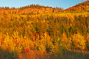 Forested hills in autumn color<br />Near Dublin<br />Ontario<br />Canada