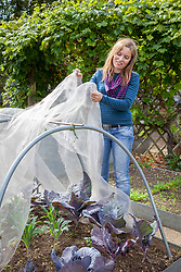 Netting brassicas by using environmesh placed over metal hoops.