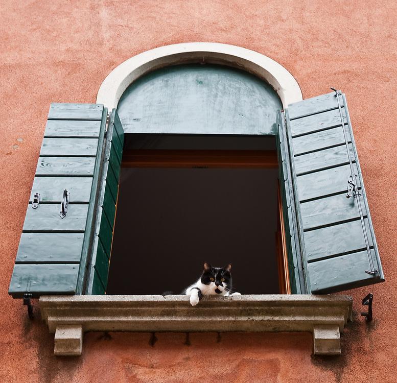 Images from Venice  - Fotografie di Venezia<br /> <br /> <br /> ***Agreed Fee's Apply To All Image Use***<br /> Marco Secchi /Xianpix<br /> tel +44 (0)207 1939846<br /> tel +39 02 400 47313<br />  e-mail sales@xianpix.com<br /> www.marcosecchi.com Cats in Venice