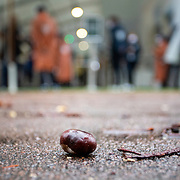 PARIS, FRANCE September 27.  A seed or 'conker' from a horse chestnut tree lies on the ground at the entrance to Roland Garros as spectators arrive for the start of play on a wet autumn day on day one of the French Open Tennis Tournament at Roland Garros on September 27th 2020 in Paris, France. (Photo by Tim Clayton/Corbis via Getty Images)