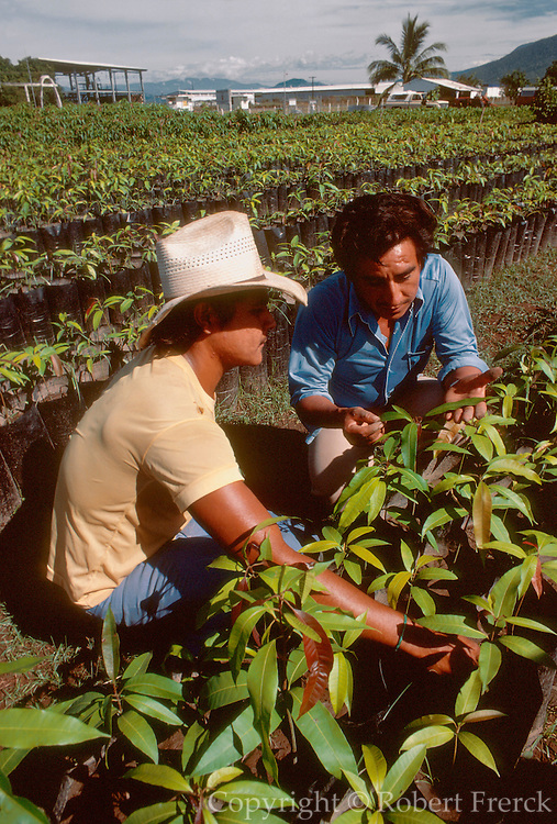 MEXICO, AGRICULTURE Experimental government farm, plant and crop study, near Colima on Pacific Coast