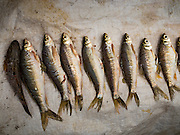 02 APRIL 2016 - NA SAK, LAMPANG, THAILAND:  Fish caught in Mae Chang Reservoir near Sobjant village. The village of Sobjant in Na Sak district in Lampang province was submerged when the Mae Chang Reservoir was created in the 1980s. The village was relocated to higher ground a few kilometers from its original site. The drought gripping Thailand drained the reservoir and the foundations of the Buddhist temple in the original village became visible early in 2016. Thai families come down to the original village to pray in the ruins of the temple and look at what's left of the village. This is the first time in more than 30 years that this area has not been under two meters of water.     PHOTO BY JACK KURTZ