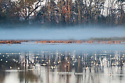 Love how the fog, reflections and feeding Dowitcher's all came together in this image.  Bombay Hook NWR, Delaware