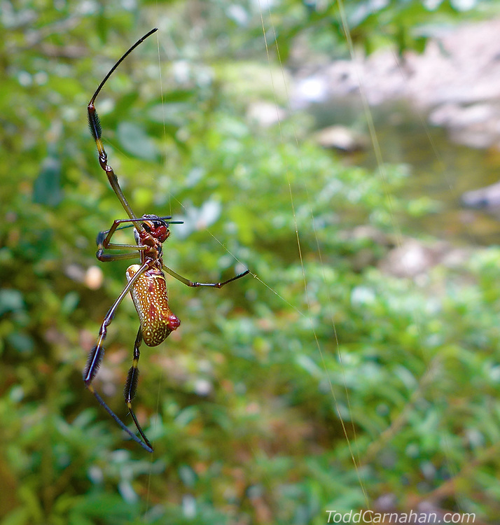 spider Insects, bugs, and arachnids among other invertebrates in southern BC and Vancouver Island in the Pacific North-West.
