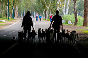 Silhouettes of Dog walkers in the park. Photographed in Tel Aviv, Israel