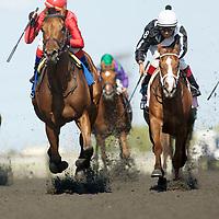Thoroughbred Racing Woodbine Oaks 2011