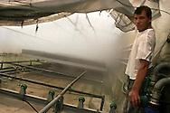 Sanremo: Una delle molte serre presenti sul territorio sanremese. (Serra De Benedetti).Nella foto una zona al 100% di umidità per la crescita accellerata delle piante.<br /> <br /> <br /> Sanremo: One of the many greenhouses in the area of Sanremo. (Serra De Benedetti). In the photo area at 100% humidity for accelerated growth of plants.