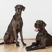 20120326 XXL Dogs/Karen