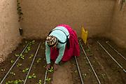 Bolivia 2013. Finaya village. Benedicta Mamani, vice Presidente of Sartasinyani Women's Organisation with her greenhouse (carpa solar )