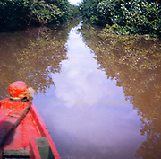 Low resolution out of focus picture of prow of boat in Caroni swamp with mangrove plants, Trinidad early 1960s