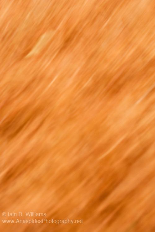Blurred Needles, Tasmania