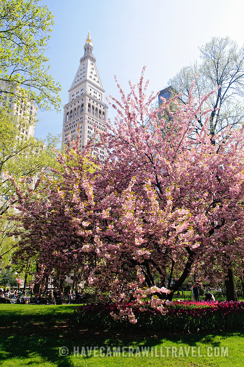 New York's Madison Square on a spring day with flowers blooming and clear blue sky