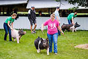 21 JULY 2020 - COLFAX, IOWA: People exercise their pigs at the Jasper County Fair in Colfax, about 30 miles east of Des Moines. Summer is county fair season in Iowa. Most of Iowa's 99 counties host their county fairs before the Iowa State Fair. In 2020, because of the COVID-19 (Coronavirus) pandemic, many county fairs were cancelled, or scaled back to concentrate on 4H livestock judging. The Iowa State Fair was cancelled completely. The Jasper County Fair cancelled most events and focused on just the 4H contests. Tuesday were the swine contests.                 PHOTO BY JACK KURTZ