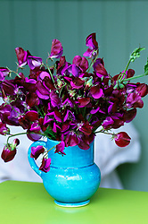 Sweet peas in a turquoise jug. Lathyrus 'Matucana'