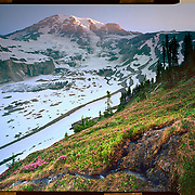 Glacier View sunrise, Mount Rainier National Park. 4x5 Kodak Ektar 100. <br /> photo by Nathan Lambrecht