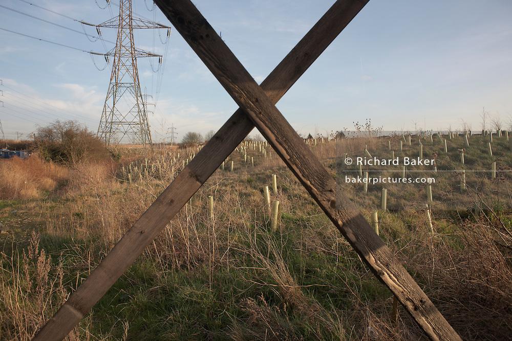 Plantation of sapling trees near an electricity pylon on Rainham Marshes, Essex.