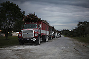 Trucks loaded with sugar cane cue inside the Belize Sugar Industries Factory, facility that processes all of the BSCFA's sugar cane. Belize Sugar Cane Farmers Association (BSCFA). Belize Sugar Industries Factory, Orange Walk, Belize. January 22, 2013.