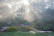 63821-23708 Sun rays in fog in flower garden, Marion Co., IL