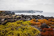 Landscape of Punta Suarez, Espanola Island, Galapagos Islands, Ecuador