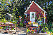 A tiny wooden house and garden along the boardwalk on Hammer Slough in Petersburg, Mitkof Island, Alaska. Petersburg settled by Norwegian immigrant Peter Buschmann is known as Little Norway due to the high percentage of people of Scandinavian origin.
