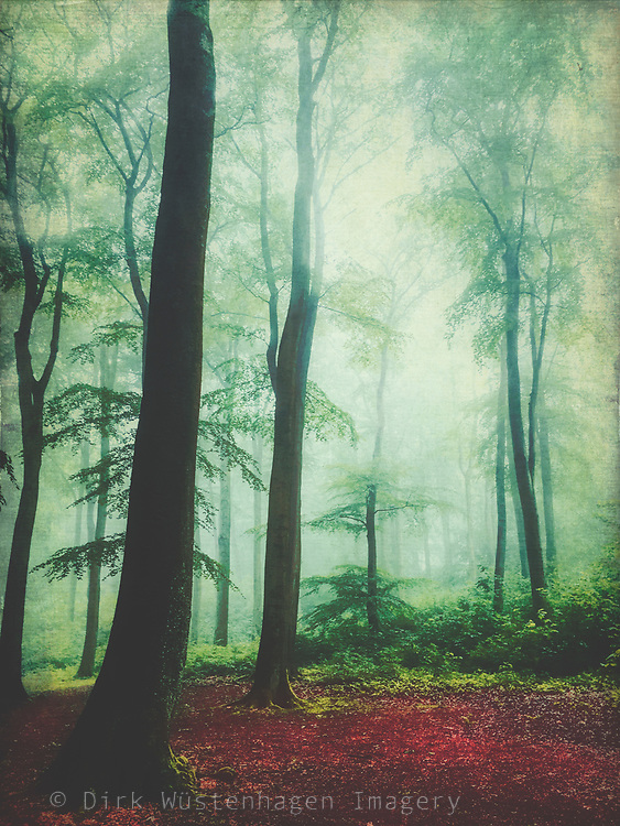 Misty forest on an autumn morning - photograph edited with texture overlays