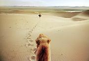 Camel riding in the Gobi desert