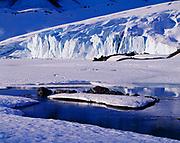 Bear River Glacier, Coast Mountains, British Columbia, Canada.