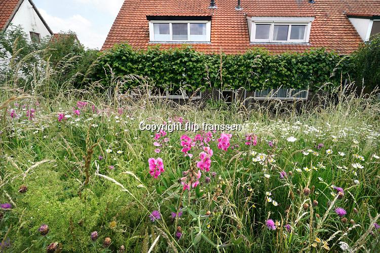 Nederland, Ooijpolder, 11-6-2020 Aan de dijk langs de berm groeien mooie veldbloemen zoals boterbloemen en distels in deze lente . Dijkhuisjes op de achtergrond. Huizen langs de dijk, dijkhuis, dijkhuizen . Foto: Flip Franssen