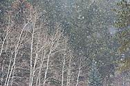 Buckhorn Canyon, Masonville CO