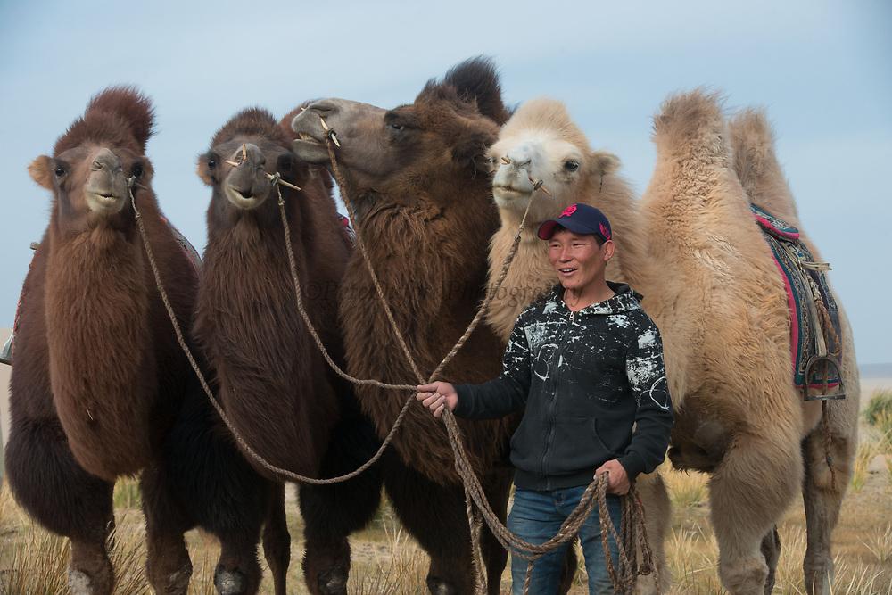 Camel riding on dunes<br /> Khongoryn Els<br /> foot of the Altai Mountain range<br /> Gobi Gurvansaikhan National Park<br /> Gobi Desert<br /> Mongolia<br /> They extend of 965 sq km