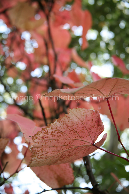 autumn leaves in Wicklow Ireland