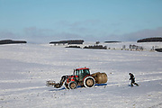 Farmers head out in the snow to feed their sheep on 23rd of January 2021, Scottish Borders, United Kingdom. During winter time, when the ground is covered with snow the sheep rely on fodder provided by the farmer. The field is above the village Stow, near Galashields.