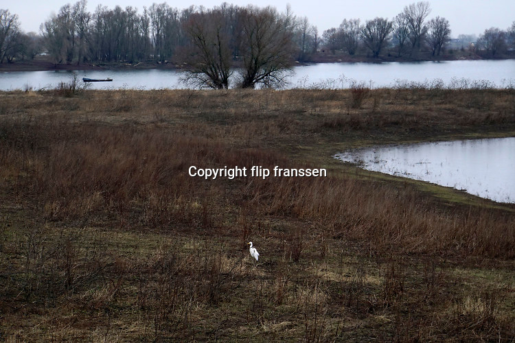 Nederland, Kekerdom, 6-2-2019Een zilverreigers taat in de uiterwaarden van de Rijn, Waal. Het gebied staat bekend als de natuurgebied de Gelderse Poort en is onderdeel van het project ruimte voor de rivier .