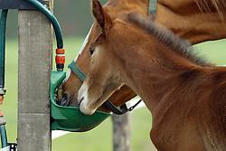 Merrie en veulen bij drinkbak<br /> © Hippo Foto