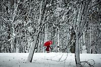 Bialystok, 26.01.2017. Po całodobowych obfitych opadach sniegu miasto zostalo przykryte 30 cm warstwa bialego puchu. Szczegolnie uroczo wygladaly miejskie parki N/z osniezone drzewa w Parku Zwierzynieckim i czlowiek z czerwonym parasolem fot Michal Kosc / AGENCJA WSCHOD