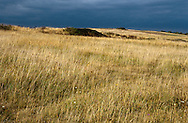 COASTAL GRASSLAND, PORTLAND