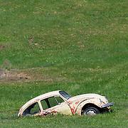 Beetle in a Field