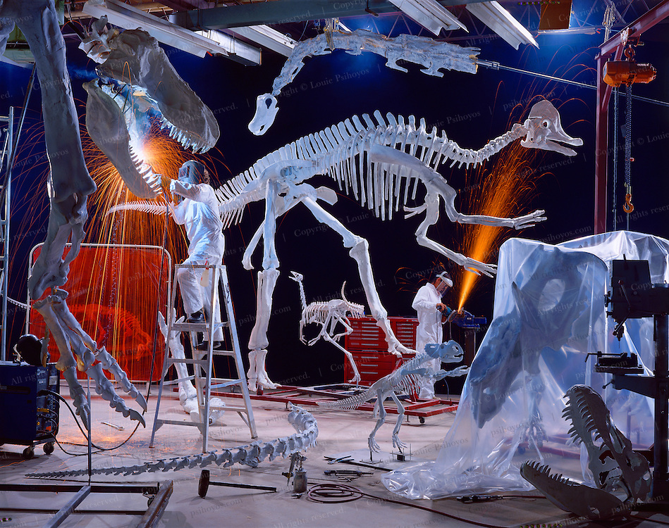 A collection of Canadian and Chinese dinosaurs discovered over five years of expeditions, is prepared for a traveling show.