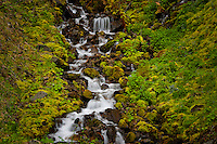 a steam tumbles down a rocky mossy slope along the South Fork of the Skokomish River in the Olympic National Forest, Washington, USA