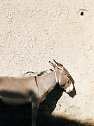 A donkey stands beside a mud built building in Djenné, Mali