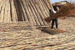 March 24, 2019 - Lianyungang, Lianyungang, China - Lianyungang,CHINA-Peasants collect reeds at the wetland in Guanyuan County, Lianyungang, east China's Jiangsu Province. (Credit Image: © SIPA Asia via ZUMA Wire)