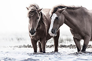 """""""Never above you. Never below you. Always beside you"""" ~ Walter Winchell<br /> <br /> Tracie Spence's fine art photography series of The Spanish Wild Mustangs."""