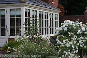 Garden  room with Nicotiana alata 'Grandiflora', Rosa 'Gertrude Jekyll', Rosa possibly 'Iceberg' and Salvia 'Hot Lips' - September
