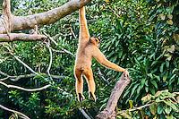 Singapour, Singapore Zoological Gardens, Mandai Zoo // Singapore, Singapore Zoological Gardens, Mandai Zoo