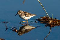 Bird Count in Wheatland CA, Tuesday Sept. 24, 2020.<br /> Photo Brian Baer