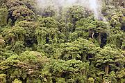 The dense jungle of the island reserve Nosy Mangabe, Madagascar