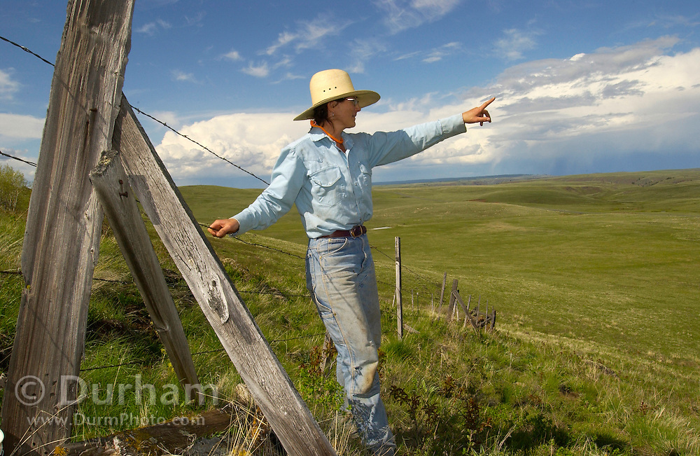 Andi Mitchell, Preserve Steward for The Nature Conservancy's Zumwalt Prairie Preserve, surveys a fence line in preparation to open the grassland to cattle grazing. The old barbed wire fence is being maintained to contain cattle while allowing wildlife, such as elk and deer, to pass.
